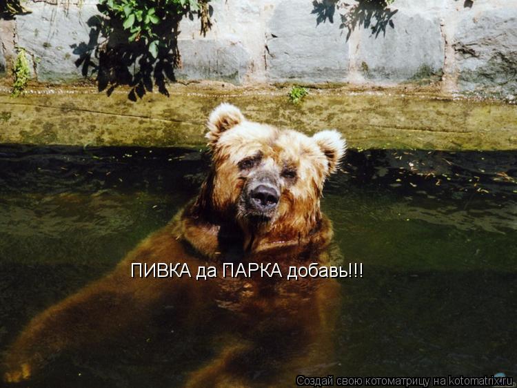 Котоматрица: ПИВКА да ПАРКА добавь!!!