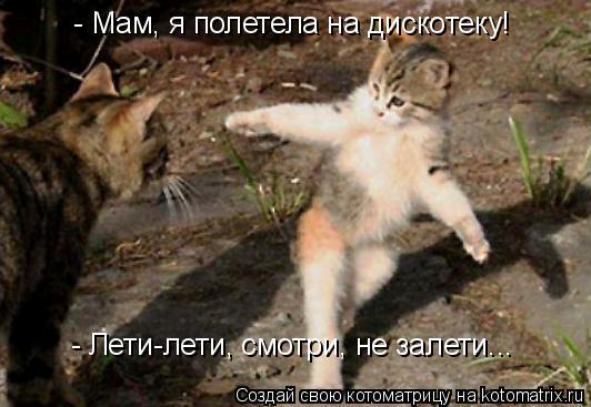 Котоматрица: - Мам, я полетела на дискотеку! - Лети-лети, смотри, не залети...