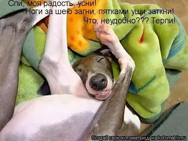 Котоматрица: Спи, моя радость, усни! Ноги за шею загни, пятками уши заткни! Что, неудобно??? Терпи!