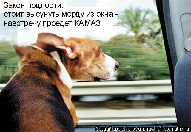 Котоматрица: Закон подлости: стоит высунуть морду из окна -  навстречу проедет КАМАЗ
