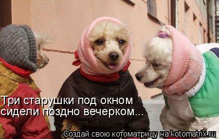 Котоматрица: Три старушки под окном сидели поздно вечерком...
