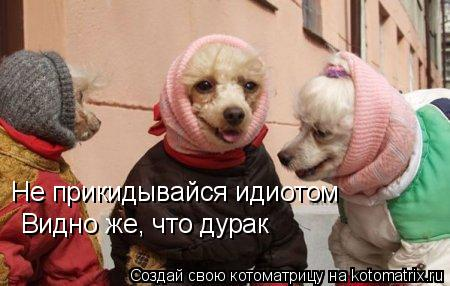 Котоматрица: Не прикидывайся идиотом Видно же, что дурак