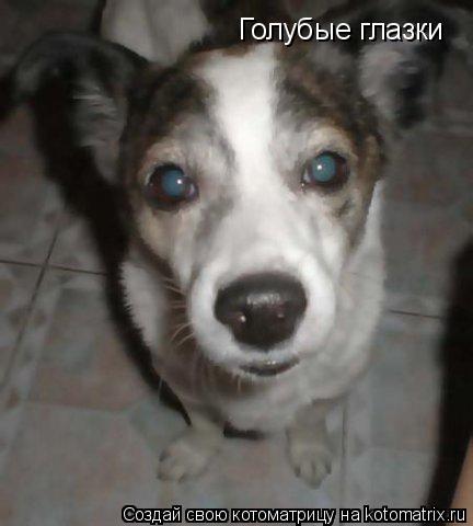 Котоматрица: Голубые глазки