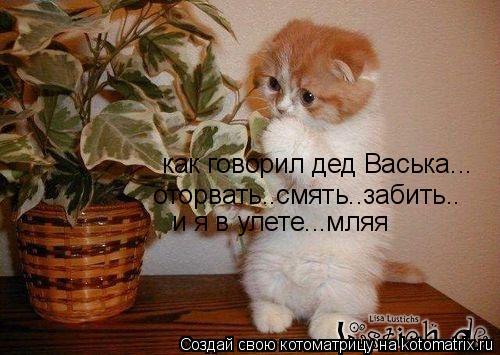 Котоматрица: как говорил дед Васька... оторвать..смять..забить.. и я в улете...мляя