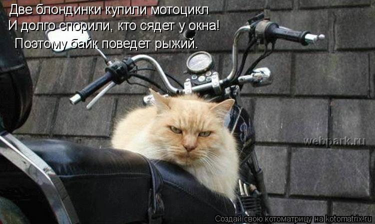 Котоматрица: Две блондинки купили мотоцикл И долго спорили, кто сядет у окна! Поэтому байк поведет рыжий.