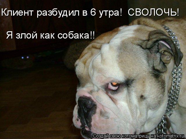 Котоматрица: Клиент разбудил в 6 утра!  СВОЛОЧЬ!  Я злой как собака!!