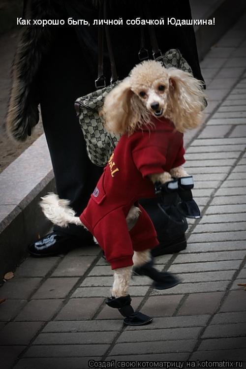 Котоматрица: Как хорошо быть, личной собачкой Юдашкина!