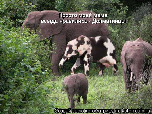 Котоматрица: Просто моей маме  всегда нравились - Долматинцы!
