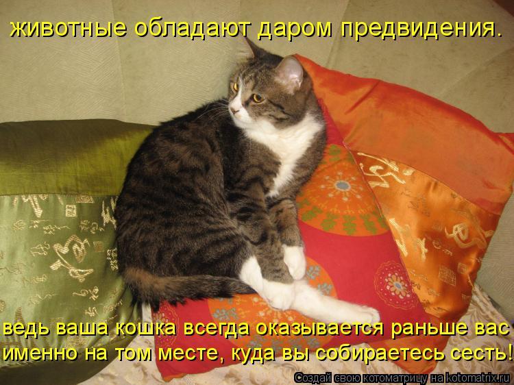 Котоматрица: животные обладают даром предвидения. именно на том месте, куда вы собираетесь сесть! ведь ваша кошка всегда оказывается раньше вас