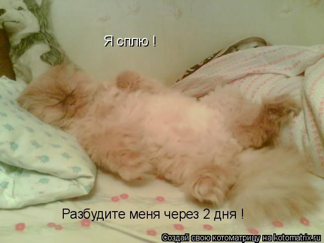 Котоматрица: Я сплю ! Разбудите меня через 2 дня !