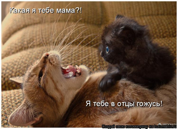 Котоматрица: Какая я тебе мама?!  Я тебе в отцы гожусь!