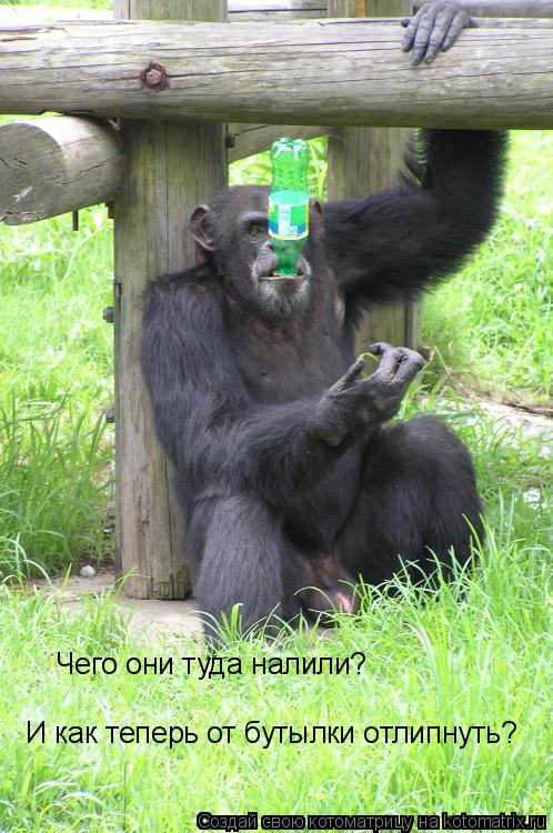 Котоматрица: Чего они туда налили? И как теперь от бутылки отлипнуть?