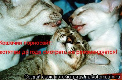 Котоматрица: Кошачий порносайт:  котятам до года смотреть не рекомендуется!