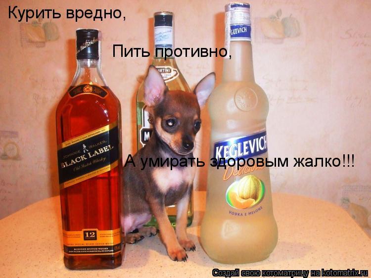 Котоматрица: Курить вредно, Пить противно, А умирать здоровым жалко!!!