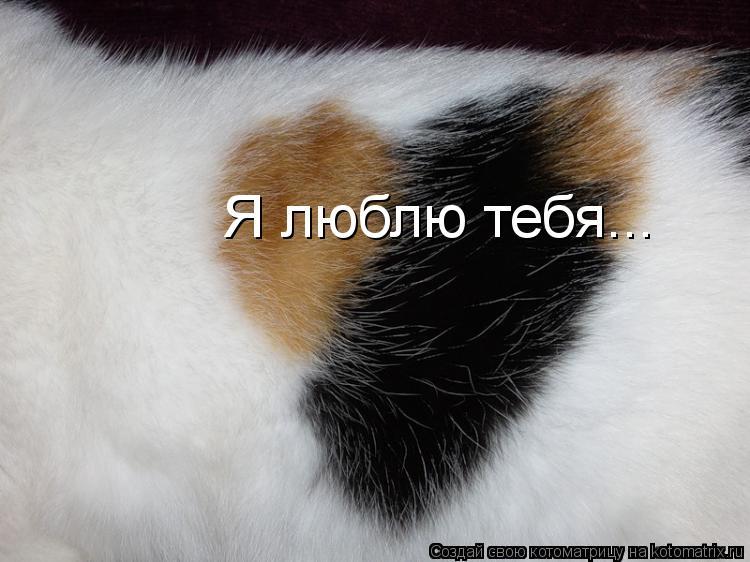 Котоматрица: Я люблю тебя...