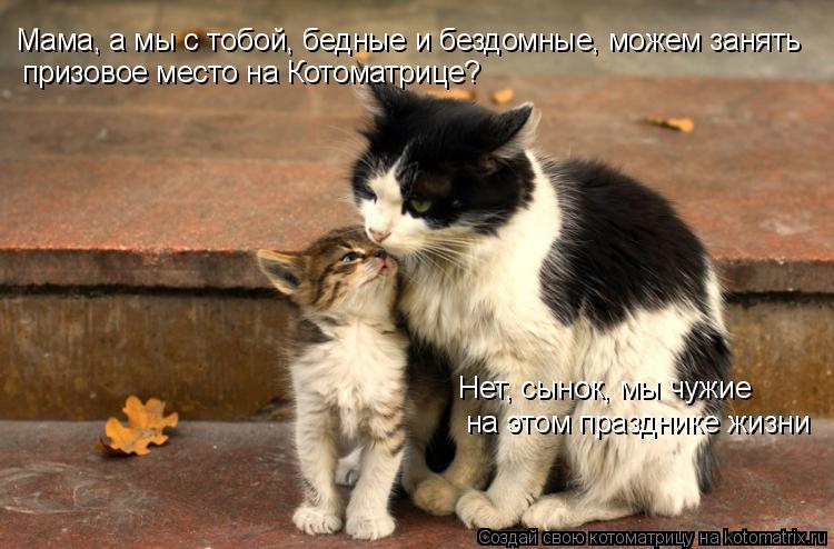 Котоматрица: Мама, а мы с тобой, бедные и бездомные, можем занять призовое место на Котоматрице? Нет, сынок, мы чужие на этом празднике жизни