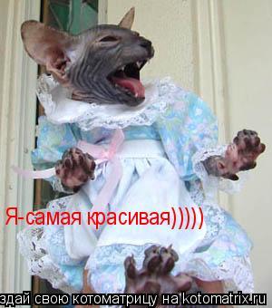 Котоматрица: Я-самая красивая)))))