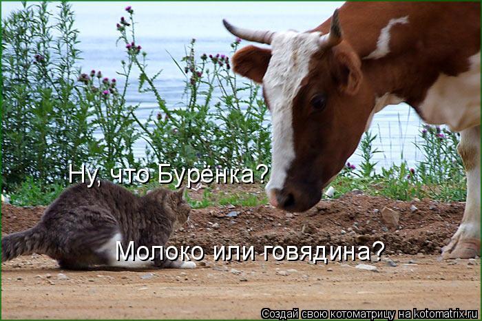 Котоматрица: Ну, что Бурёнка? Молоко или говядина?