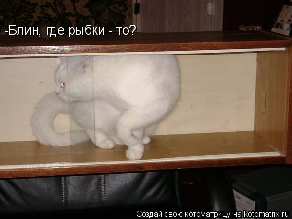 Котоматрица: -Блин, где рыбки - то?