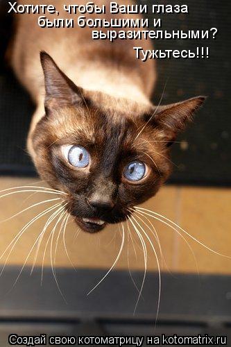 Котоматрица: Хотите, чтобы Ваши глаза были большими и  выразительными? Тужьтесь!!!