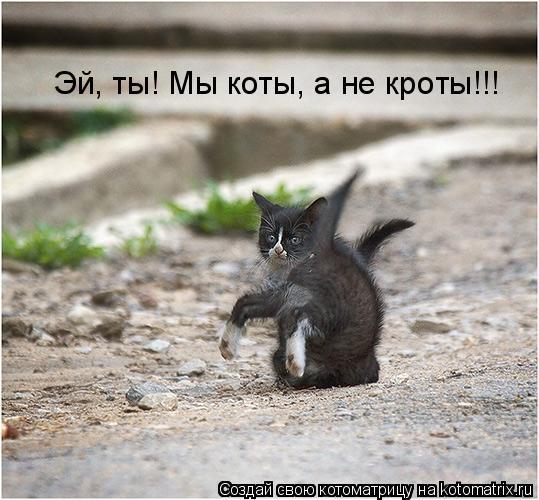 Котоматрица: Эй, ты! Мы коты, а не кроты!!!