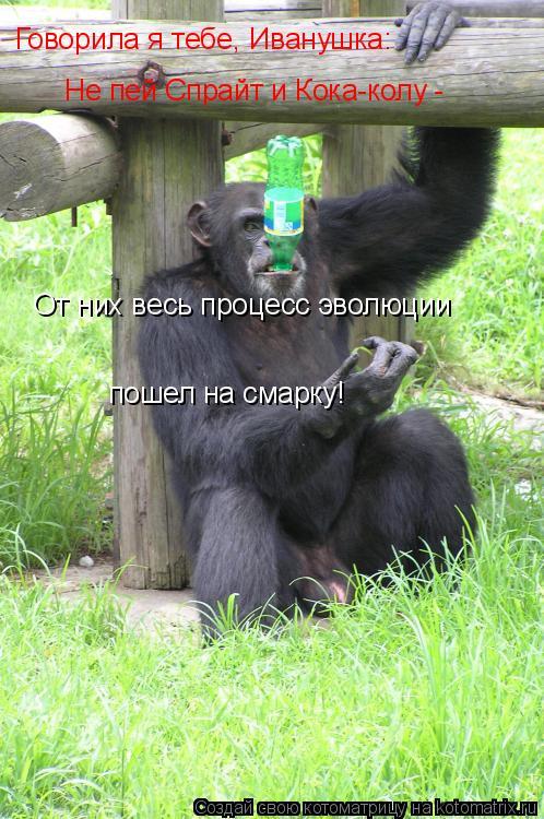 Котоматрица: Говорила я тебе, Иванушка: Не пей Спрайт и Кока-колу - От них весь процесс эволюции пошел на смарку!