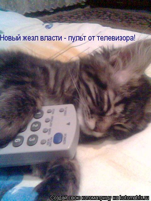 Котоматрица: Новый жезл власти - пульт от телевизора!