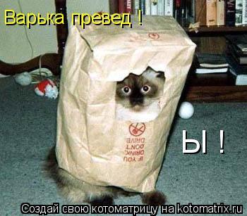 Котоматрица: Варька превед ! Ы !