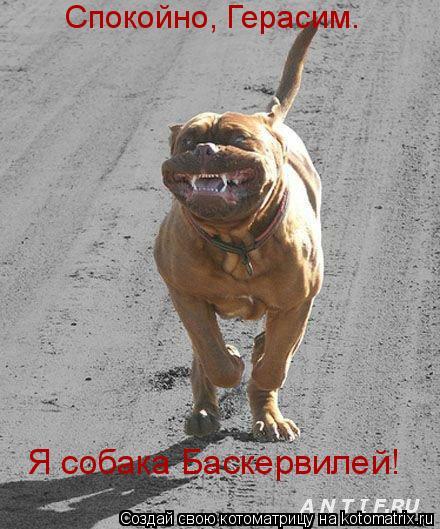 Котоматрица: Спокойно, Герасим.  Я собака Баскеpвилей!