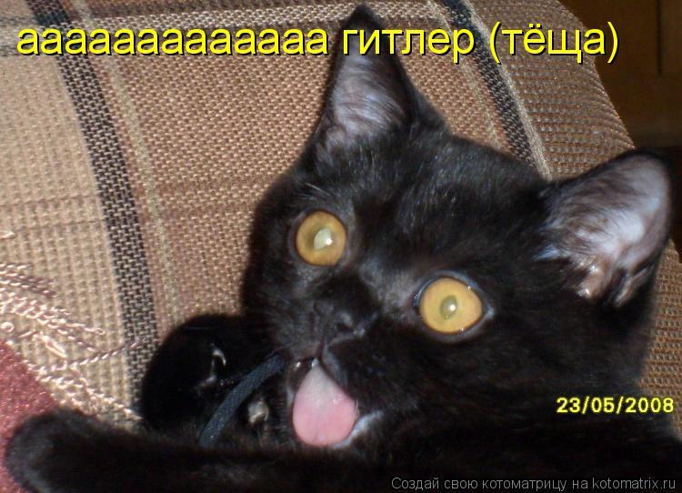 Котоматрица: ааааааааааааа гитлер (тёща)