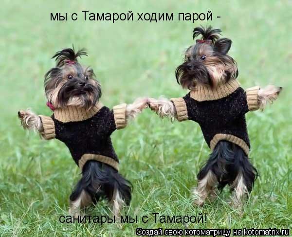 Котоматрица: мы с Тамарой ходим парой - санитары мы с Тамарой!