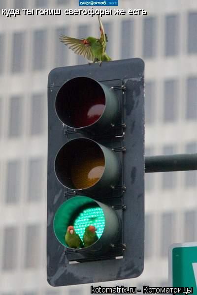 Котоматрица: куда ты гониш светофоры же есть