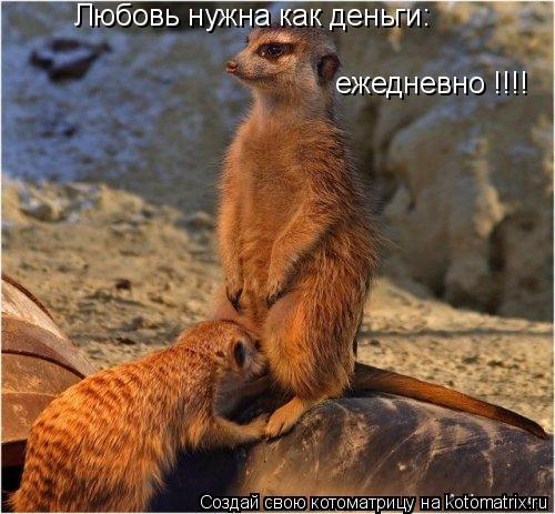 Котоматрица: Любовь нужна как деньги: ежедневно !!!!