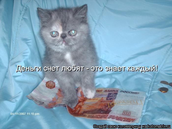 Котоматрица: Деньги счет любят - это знает каждый!