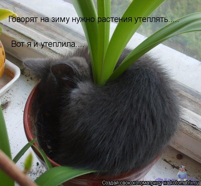 Котоматрица: Говорят на зиму нужно растения утеплять..... Вот я и утеплила....