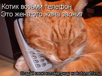 Котоматрица: Котик возьми телефон Это жена,это жена звонит