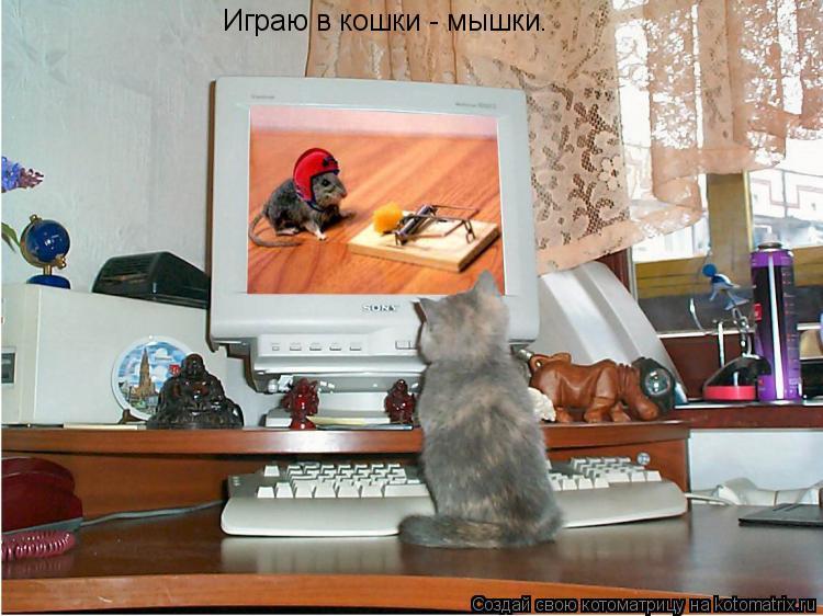 Котоматрица: Играю в кошки - мышки.