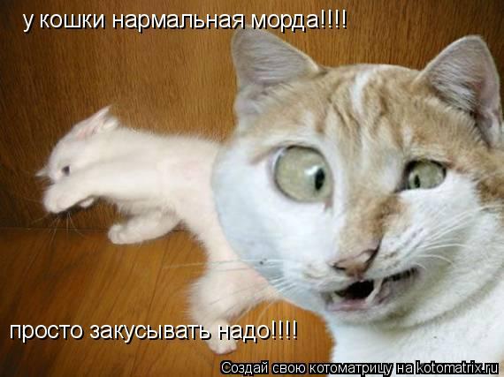 Котоматрица: у кошки нармальная морда!!!! просто закусывать надо!!!!