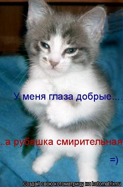Котоматрица: У меня глаза добрые...... ..а рубашка смирительная))) =)