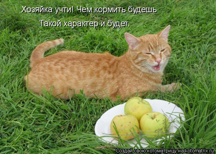 Котоматрица: Хозяйка учти! Чем кормить будешь Такой характер и будет.