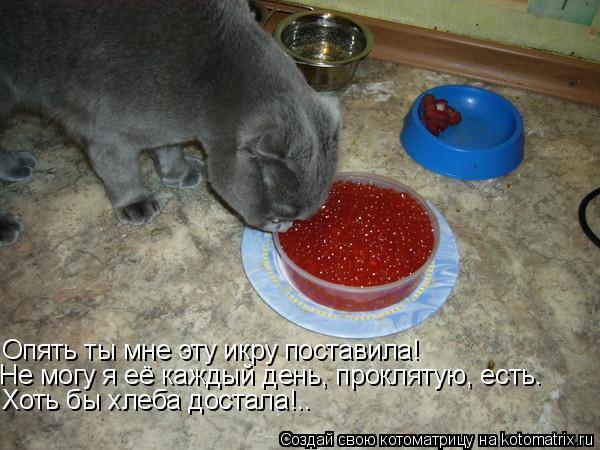 Котоматрица: Опять ты мне эту икру поставила! Не могу я её каждый день, проклятую, есть.  Хоть бы хлеба достала!..