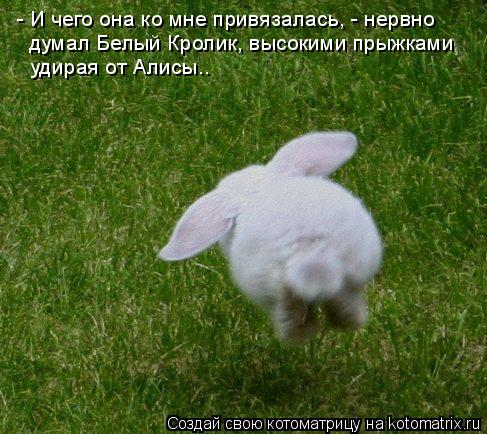 Котоматрица: - И чего она ко мне привязалась, - нервно  думал Белый Кролик, высокими прыжками  удирая от Алисы..