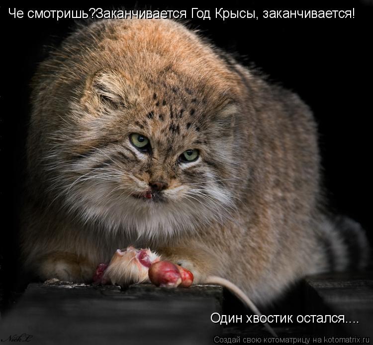 Котоматрица: Че смотришь?Заканчивается Год Крысы, заканчивается! Один хвостик остался....