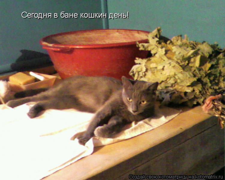 Котоматрица: Сегодня в бане кошкин день!