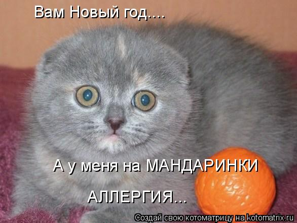 Котоматрица: Вам Новый год.... А у меня на МАНДАРИНКИ АЛЛЕРГИЯ...