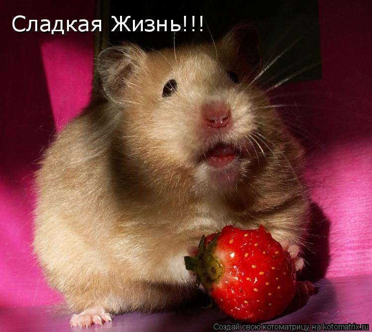 Котоматрица: Сладкая Жизнь!!!
