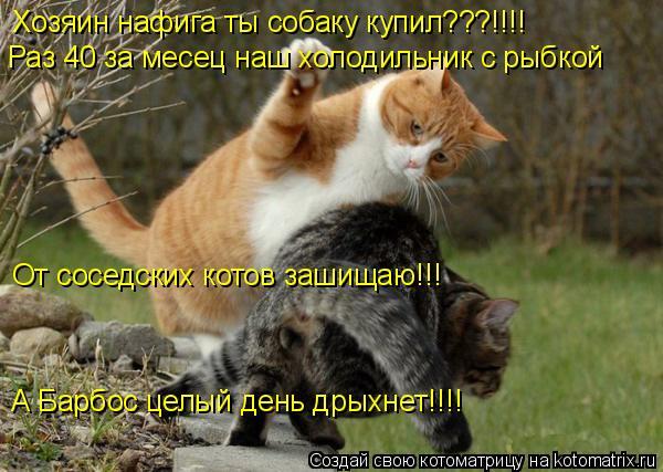 Котоматрица: Хозяин нафига ты собаку купил???!!!! Раз 40 за месец наш холодильник с рыбкой От соседских котов зашищаю!!! А Барбос целый день дрыхнет!!!!