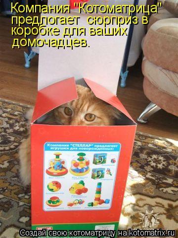 """Котоматрица: Компания """"Котоматрица"""" предлогает  сюрприз в  коробке для ваших домочадцев."""