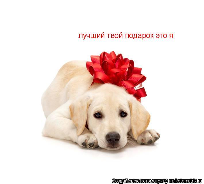 Котоматрица: лучший твой подарок это я