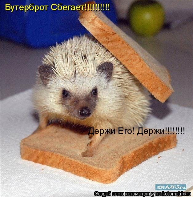 Котоматрица: Бутерброт Сбегает!!!!!!!!!! Держи Его! Держи!!!!!!!!